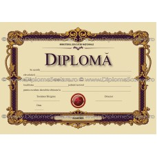 Diploma D11 2019